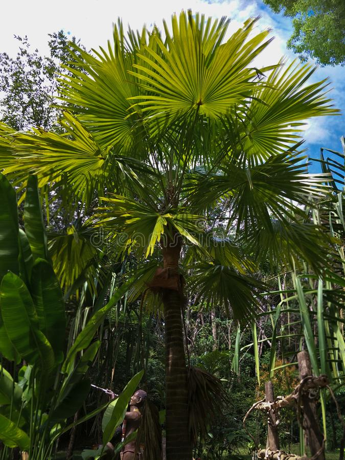 Palm in de tuin stock foto's