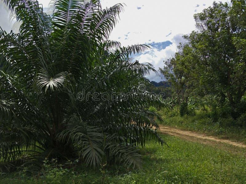 Palm in de tuin stock foto