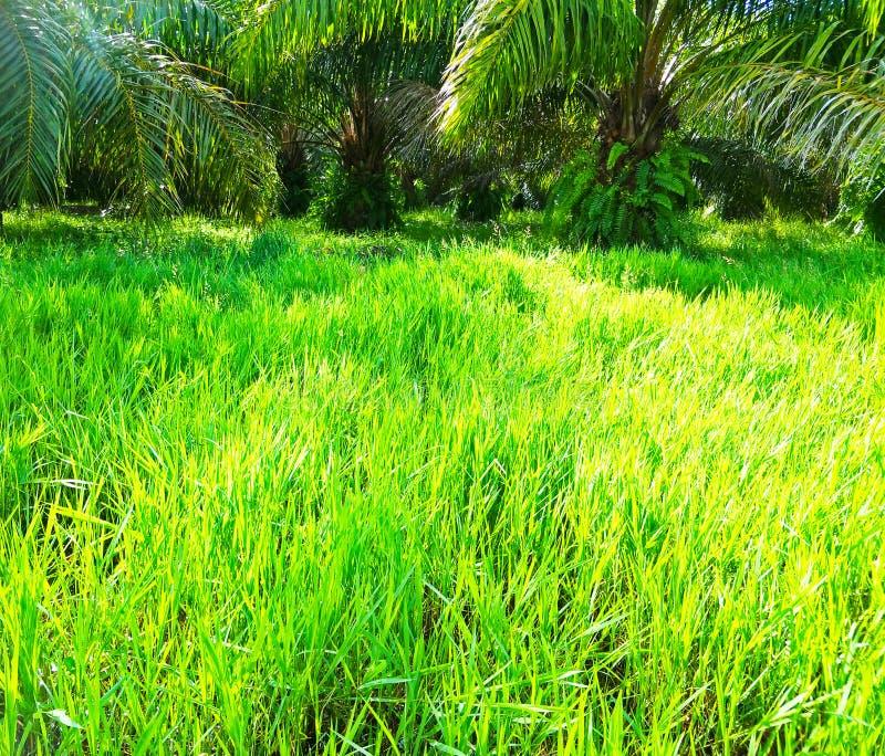 Palm in de tuin stock afbeelding