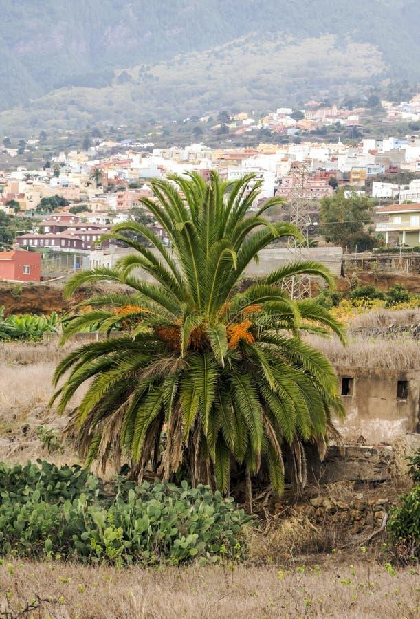 Palm in de vallei van La Orotava royalty-vrije stock foto's