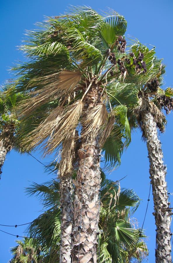 Palm in de wind royalty-vrije stock foto