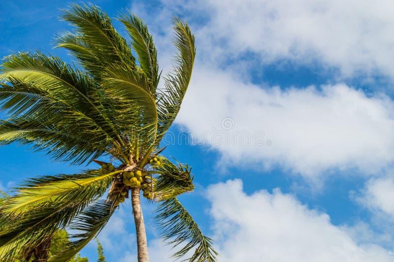 Palm in de wind royalty-vrije stock afbeeldingen