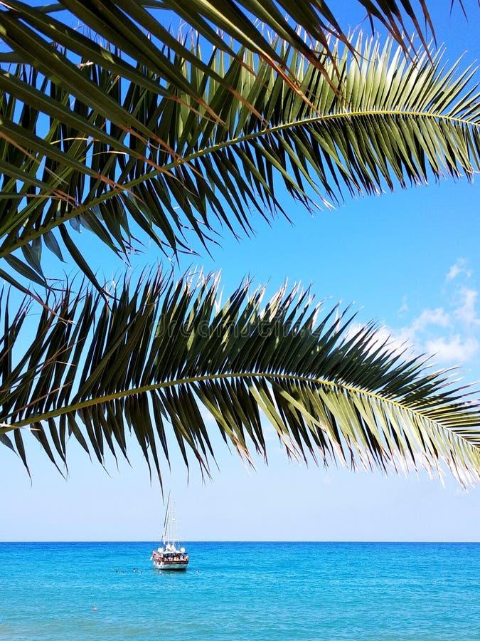 palm denny drzewo zdjęcia stock