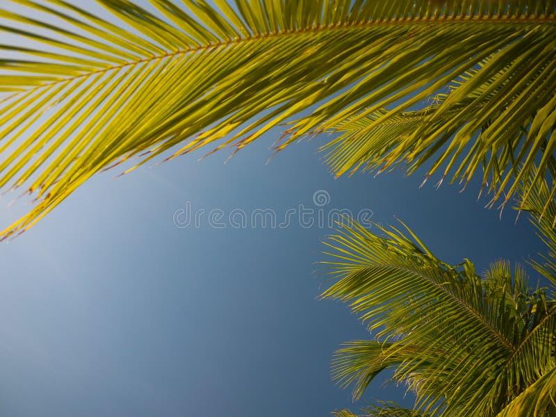 Palm die blauwe hemel ontwerpen stock foto