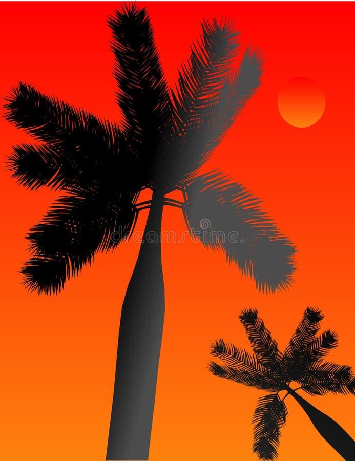 Palm die een tropische paradijsillustratie silhoueting