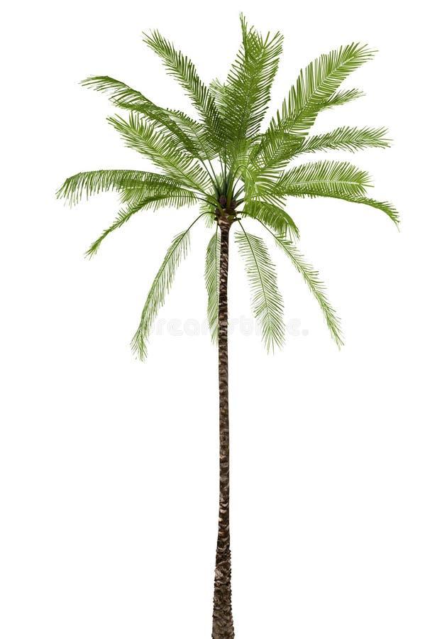 Palm die op witte achtergrond wordt geïsoleerde stock illustratie