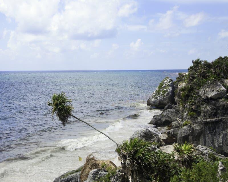 Palm die over Strand leunen stock afbeelding