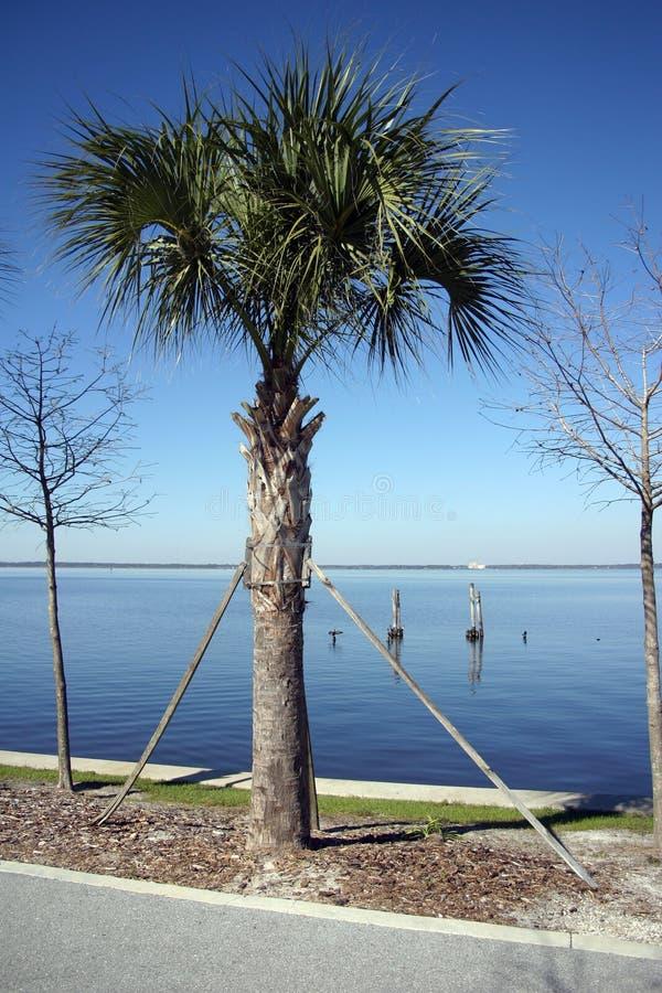 Palm die steun vergt royalty-vrije stock foto