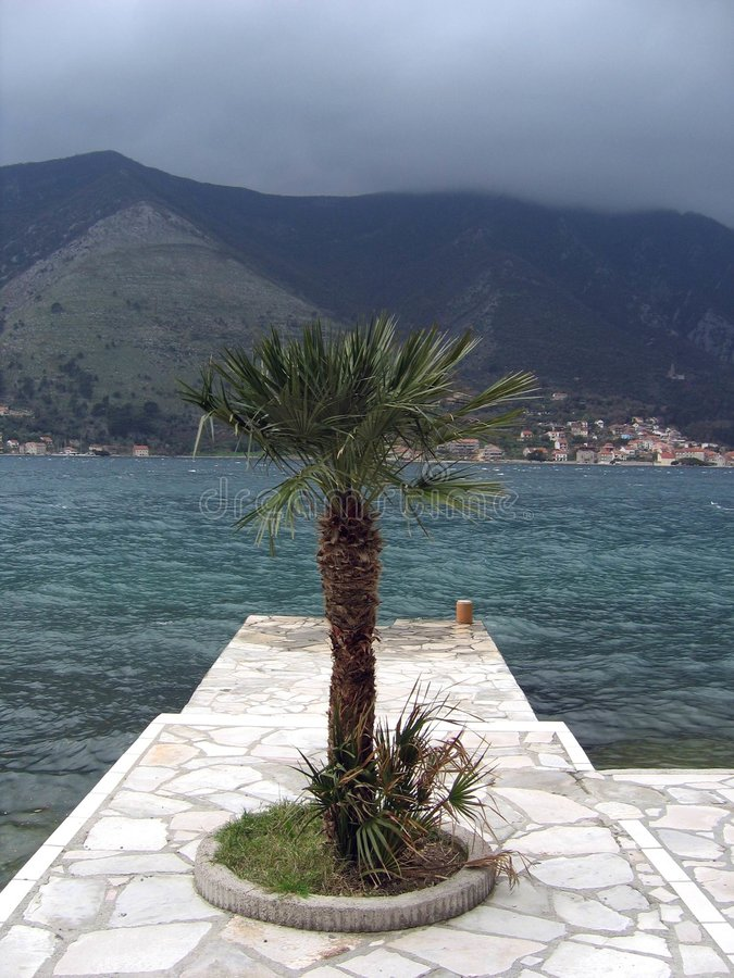 The palm at the dock stock photography