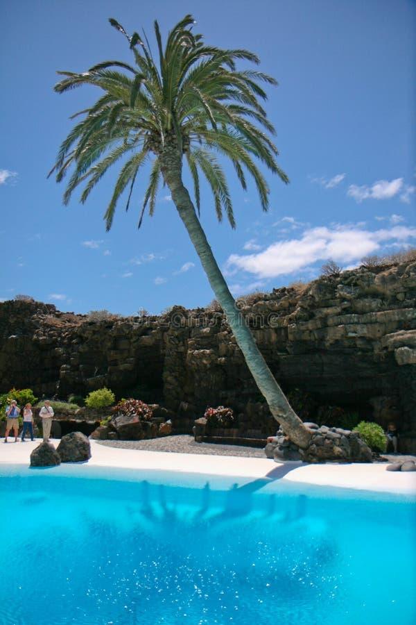 Palm door de Pool royalty-vrije stock afbeelding