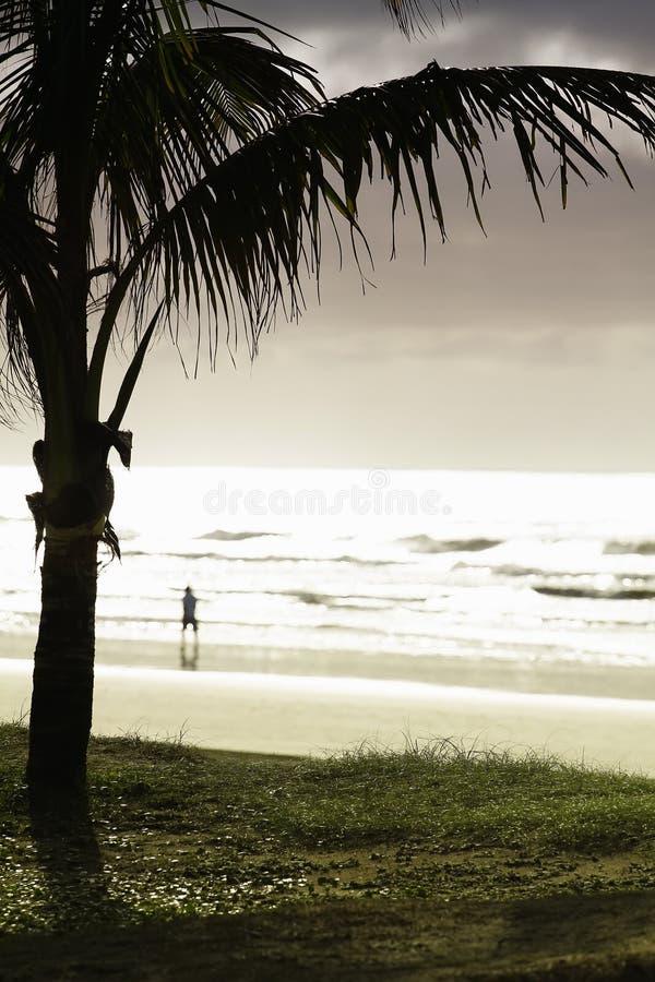 Palm door strand stock fotografie