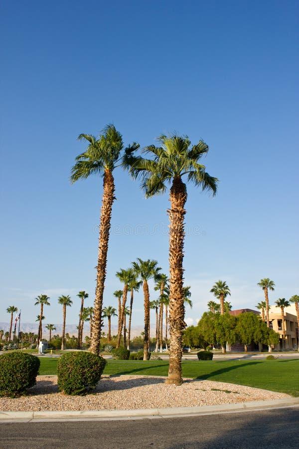 Download Palm drzewa obraz stock. Obraz złożonej z wiosna, opustoszały - 28950757