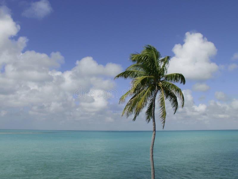 Download Palm drzewo nieba oceanu obraz stock. Obraz złożonej z tło - 28279