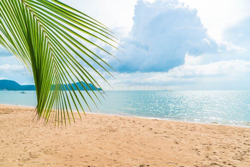 Palm with empty beach. Beautiful palm with empty beach stock photo