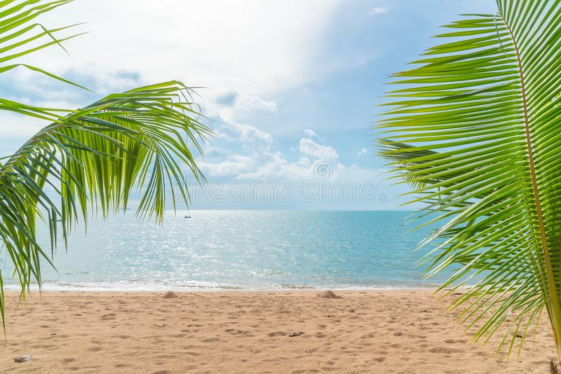 Palm with empty beach. Beautiful palm with empty beach royalty free stock photos