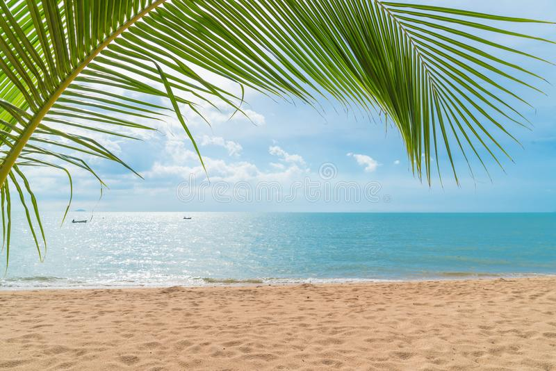 Palm with empty beach. Beautiful palm with empty beach stock photography