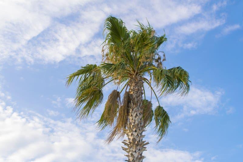 Palm en blauwe bewolkte hemel stock foto