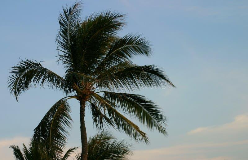 Palm en Blauwe Hemel royalty-vrije stock afbeeldingen