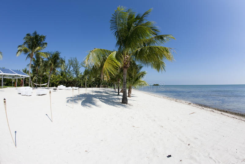 Palm en blauwe hemel Florida stock foto's