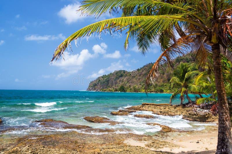Palm en Caraïbische Zee royalty-vrije stock afbeeldingen