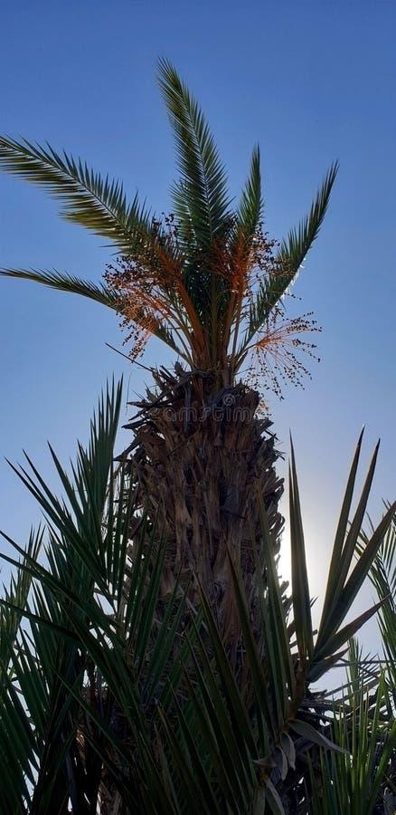 Palm en data stock afbeeldingen