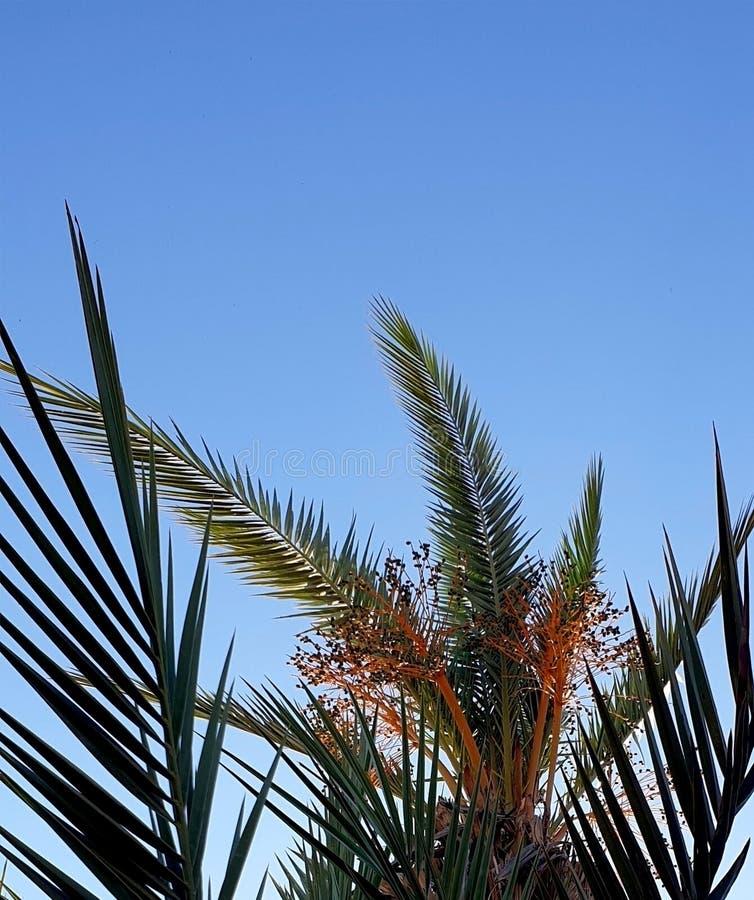 Palm en data royalty-vrije stock fotografie
