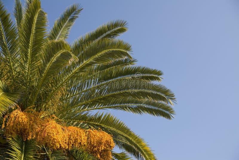 Palm en Hemel stock fotografie