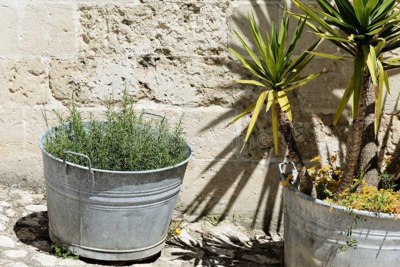 Palm en rozemarijn royalty-vrije stock afbeeldingen