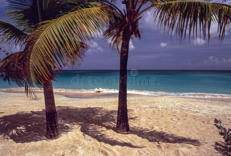 Palm en Schaduwen, Groot Anse-Strand Grenada stock afbeelding