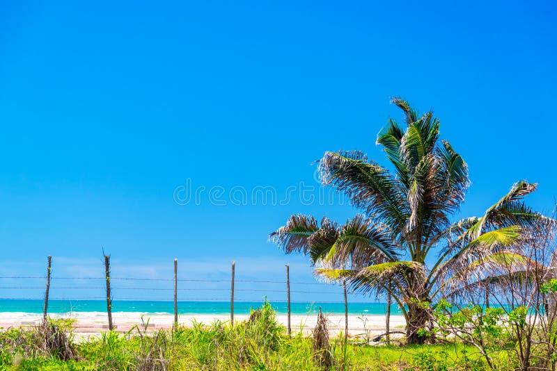 Palm en Strandmening stock fotografie