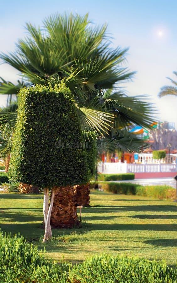 Palm en struik royalty-vrije stock foto's
