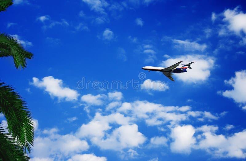 Palm en vliegtuig royalty-vrije stock fotografie