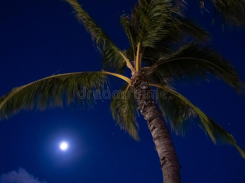Palm en volle maan bij nacht met donkerblauwe hemel royalty-vrije stock foto