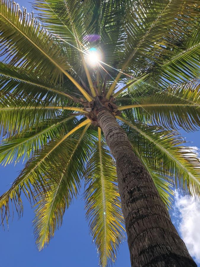 Palm en zon royalty-vrije stock afbeelding