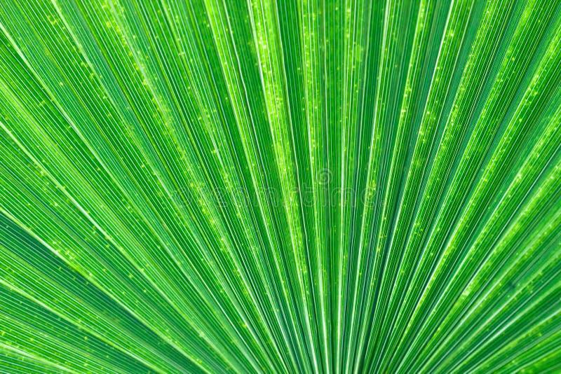 Palm Fan Pattern. Light shining through the fan pattern of a palm leaf royalty free stock photo