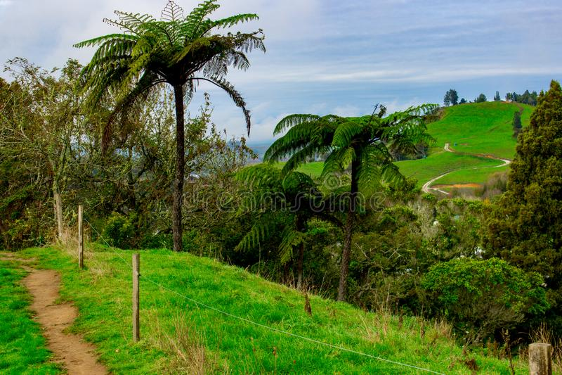Palm Fern on a Hilltop Waitomo, New Zealand royalty free stock photo