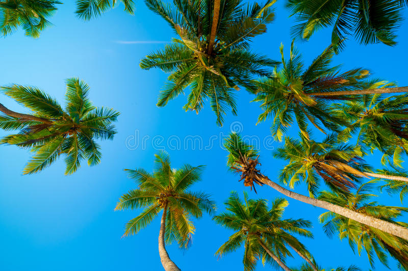 Download Palm forest stock photo. Image of lush, natural, light - 28336432