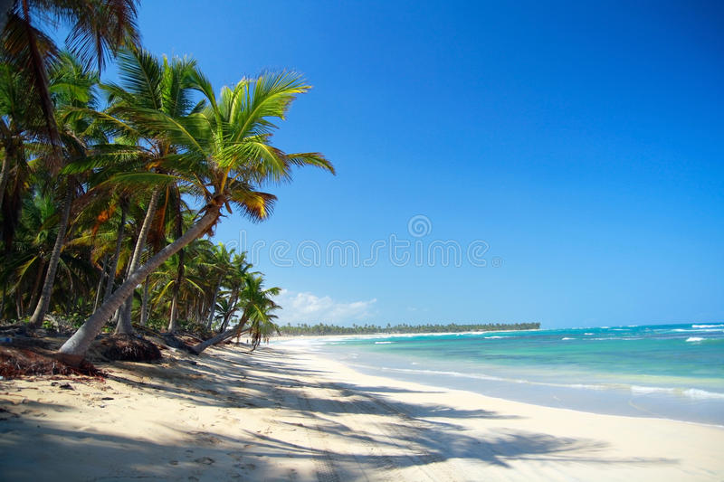 Download Palm Forest On Caribbean Beach Stock Photo - Image: 13181114