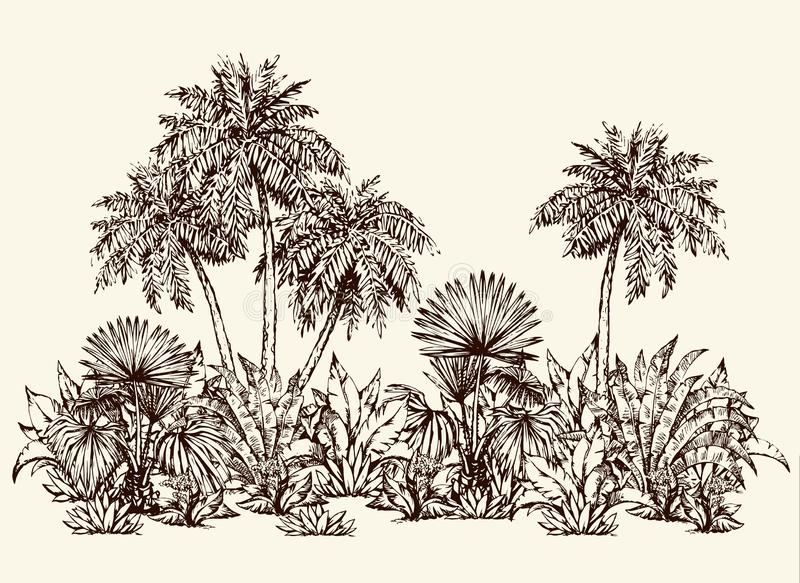 Palm forest. Vector drawing vector illustration
