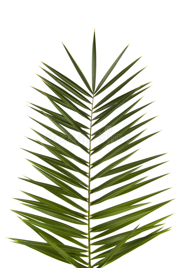 Free Palm Frond Stock Photography - 2290452