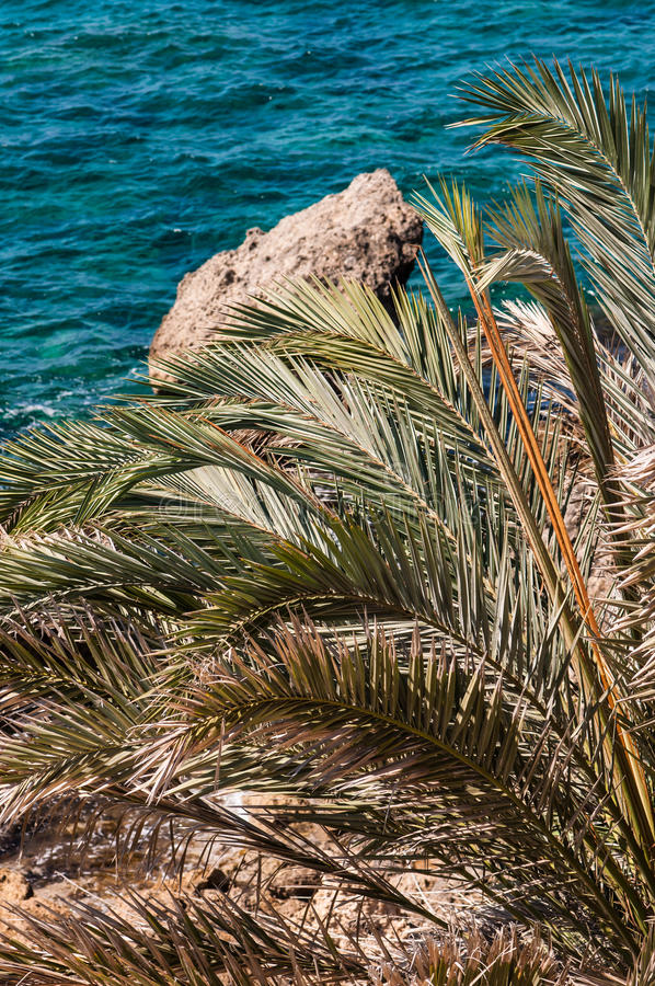 Download Palm frond stock image. Image of pacific, backgrounds - 26844523