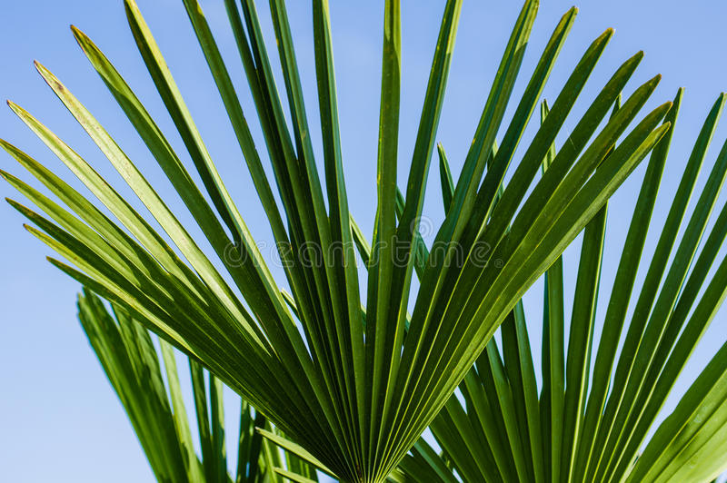 Palm frond against blue sky royalty free stock photo