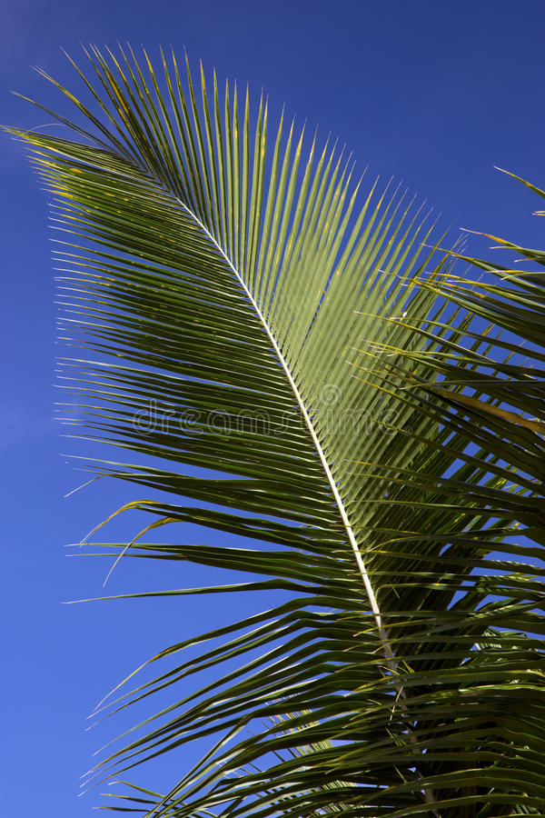 Palm Frond Against a Blue Sky stock image