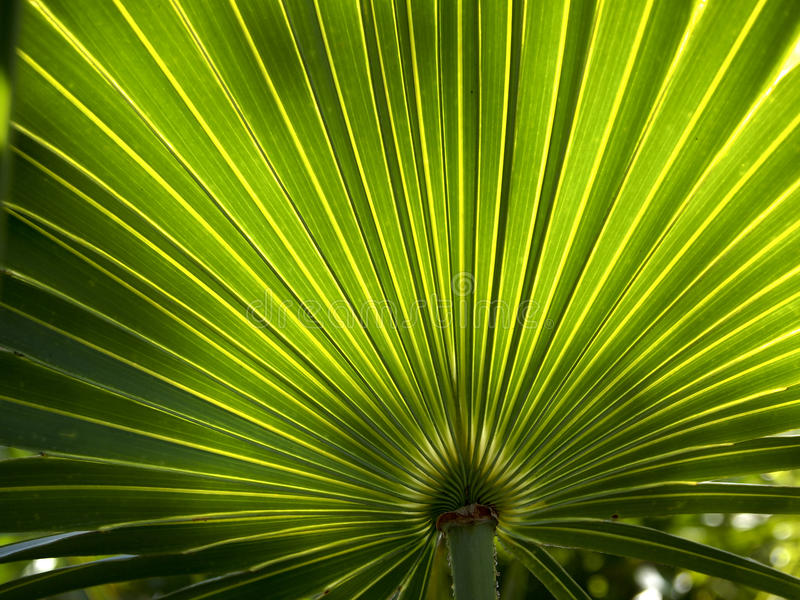 Palm Frond Background 2 royalty free stock images