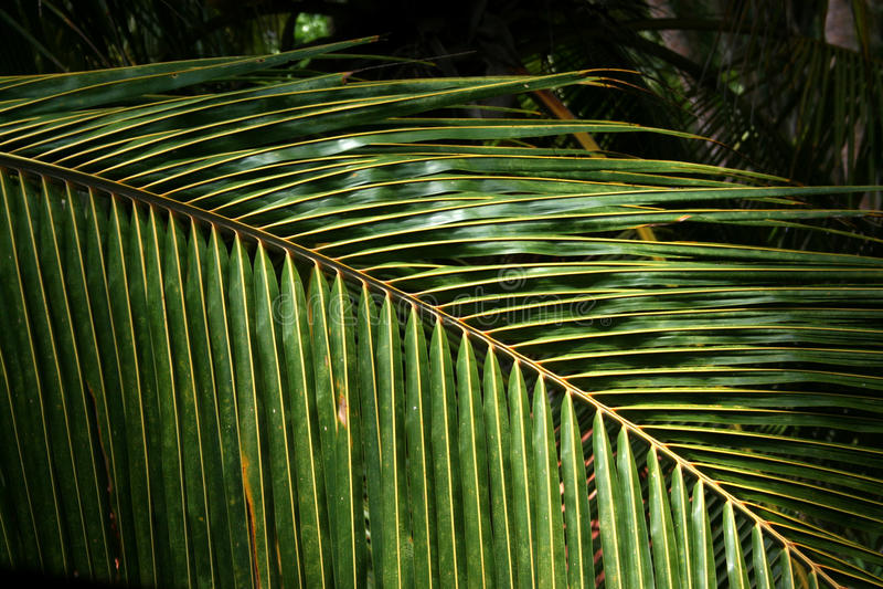 Palm fronds texture stock photos