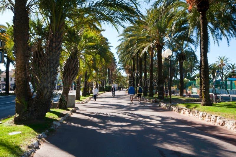Palm går på en härlig sommardag i Cannes, Frankrike arkivbilder
