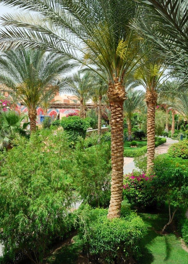 Download Palm garden stock photo. Image of sand, foliage, tourism - 13751640