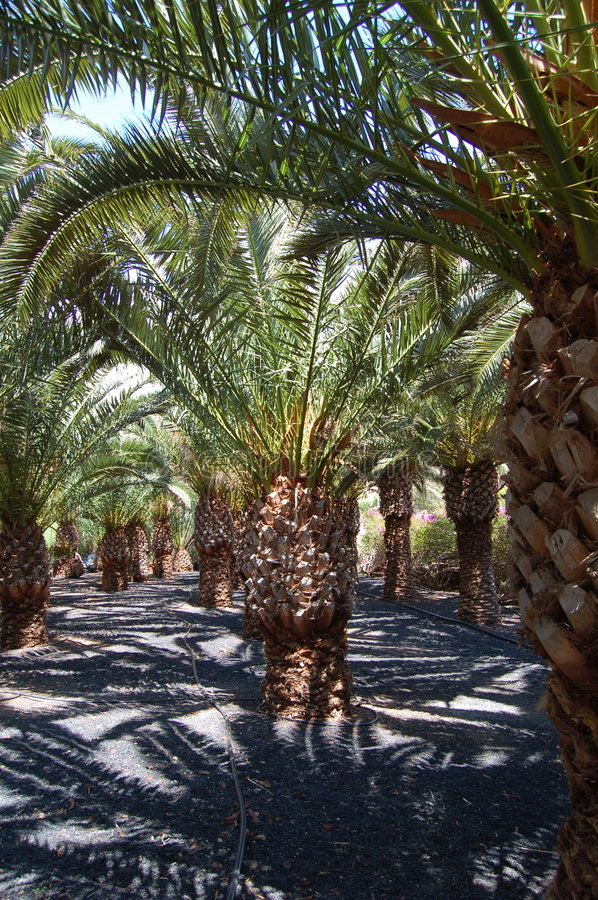 Download Palm Garden Royalty Free Stock Photography - Image: 1803247