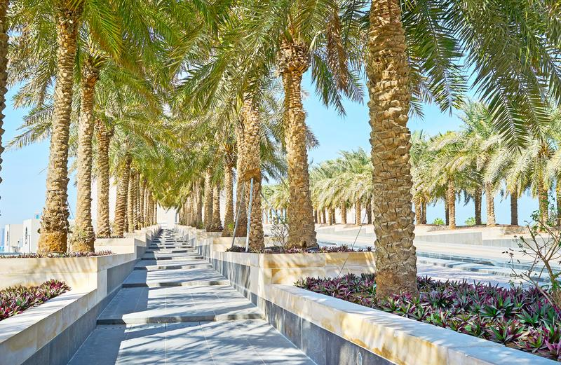 The palm garden in Doha, Qatar. The shady palm garden stretches along the hilly way to the Islamic Arts museum, Doha, Qatar stock images