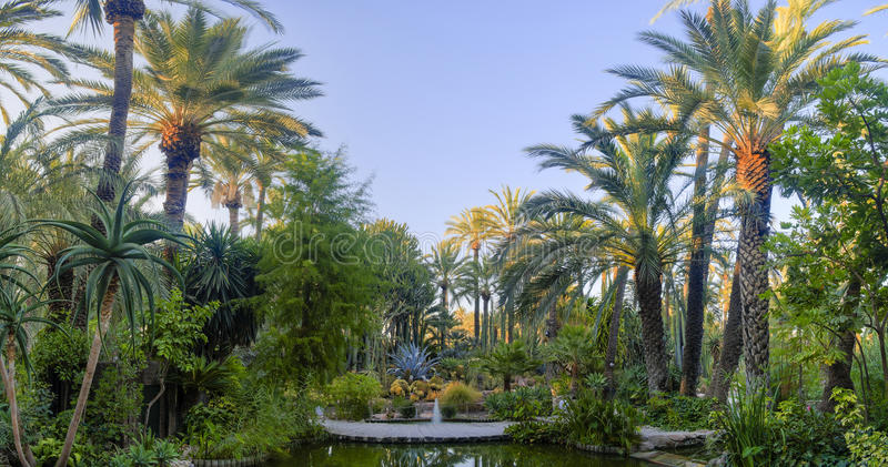 Palm garden Elche Spain. Huerto del cura is a palm garden located in Elche, province of Alicante, Spain royalty free stock images